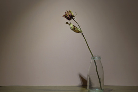 Dried rose ,still life concept