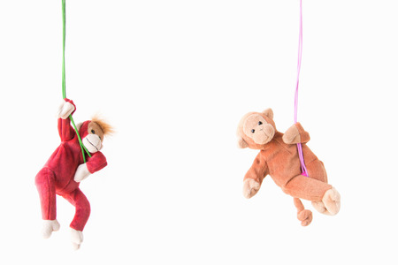Naughty monkey hung on the green line,Everywhere the monkey is happy ,Couple monkeys hanging on the rope with happy feel.