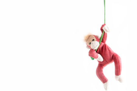 Naughty monkey hung on the green line,Everywhere the monkey is happy ,Monkey hanging on the rope with happy feel