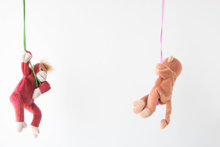 Naughty monkey hung on the  line,Everywhere the monkey is happy ,Monkey hanging on the rope with happy feel Stock Photo