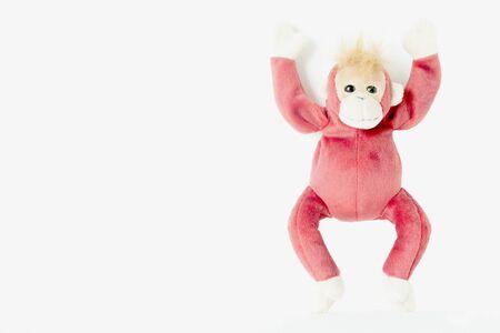 Happy monkey on white background.Happy monkey relaxing and enjoying Stock Photo