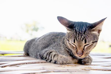A little cat sleeping on table that is relaxed in font of house, soft focus Stock fotó - 101195089