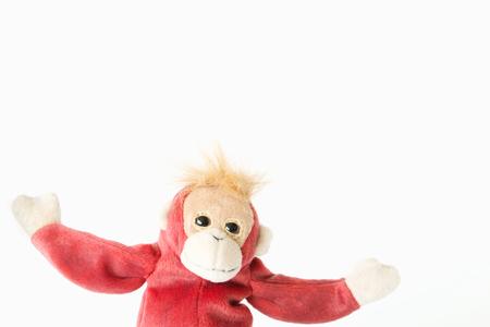 Happy monkey on white background.Happy animal relaxing and enjoying 스톡 콘텐츠