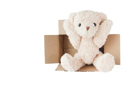 teddy bear is playing cardboard box
