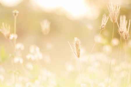 meadow flowers in early sunny fresh morning. Vintage autumn landscape,,Soft and blurry focus photo. Stock Photo