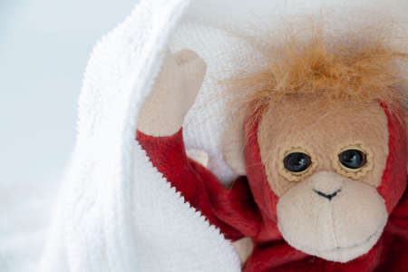 Cute monkey plays hide and seek with fabric, Happy feel concept. Reklamní fotografie