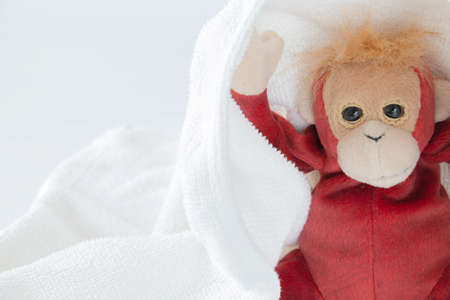 Cute monkey plays hide and seek with fabric, Happy feel concept. Stock fotó