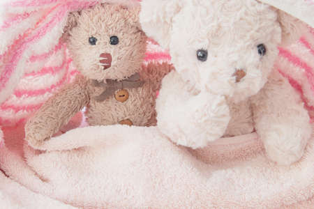 Cute doll playful in pink and white blanket, Teddy bear play hide and seek with a best friend have fun in the morning