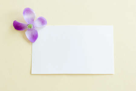 Mockup of a white paper card on pastel background, Creative design for pastel wallpaper.