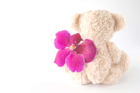 Rearview of a cute teddy bear is sitting with an orchid flower 版權商用圖片