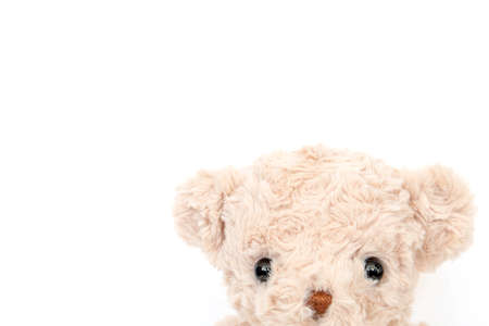 Cute teddy bear on white color background