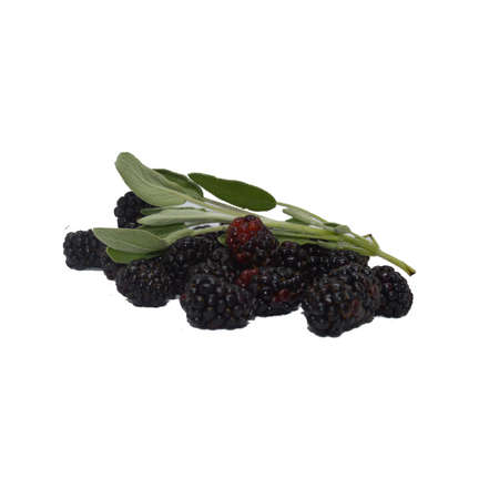 Blackberries and Sage Sprig