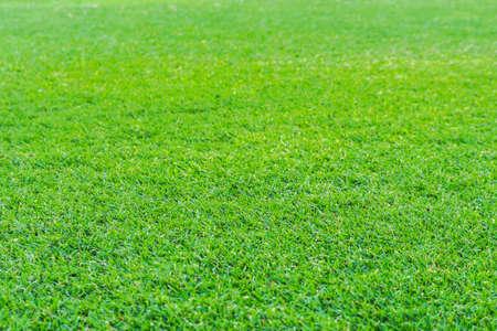 Green grass in soccer stadium. soccer field grass. focus to grass.