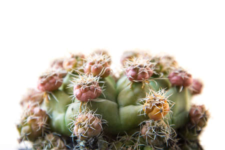 Close up cactus isolated on white background. Minimal style for cactus trendy. Natural design concept.