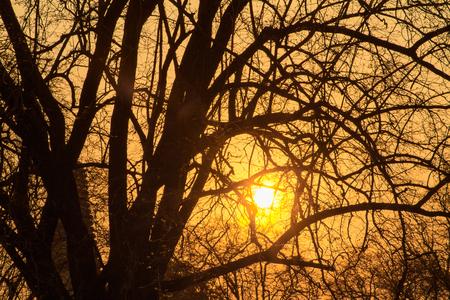 sunlgiht: Evening sunset