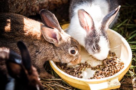 comiendo: conejos lindos