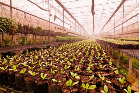 regando plantas: Plantones de �rboles de vivero
