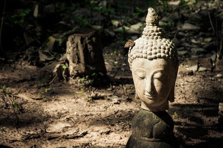 cabeza de buda: la cabeza de Buda en el suelo
