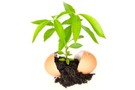 seedlings: Growing seedlings