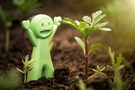 nice face: Green Baby Doll happy with seedlings.