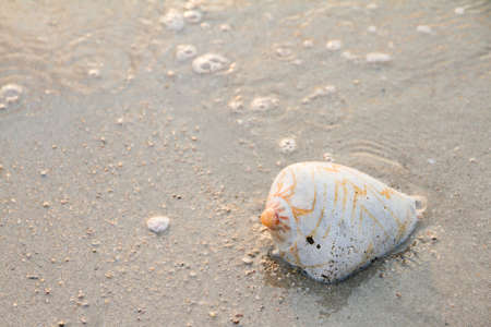 conch shell: Conch shell on beach with waves.selective focus Stock Photo