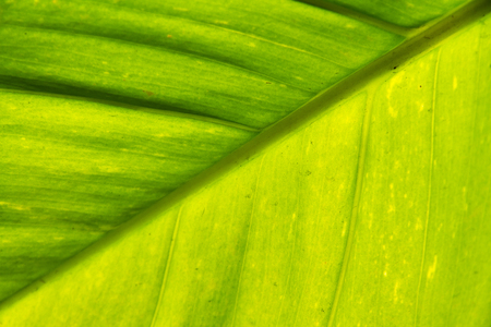 Green leaf for background. Green natural texture.