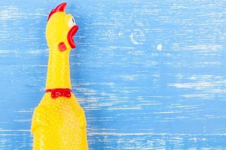 Toy yellow shrilling chicken on blue wooden background