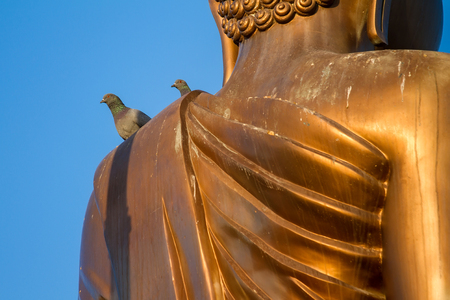Pigeons perched on the shoulder of the big golden buddha