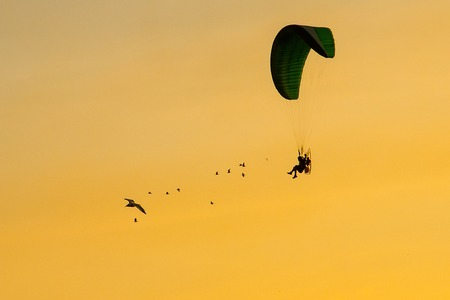 Silhouette Paramotor, Parachute, Paraglide flying in the sunset sky with seagulls.