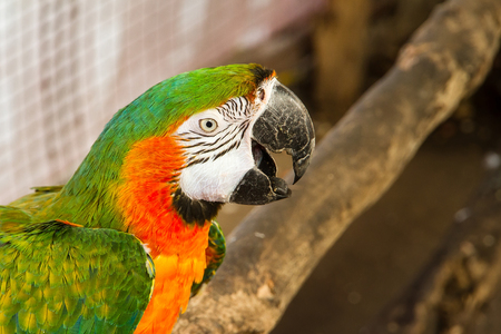 Colorful parrot birds at Samut Prakan Crocodile Farm and Zoo, Thailand Stock Photo
