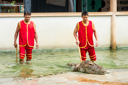 Samut Prakan, Thailand - January, 04, 2017 : Show the risk of death Crocodile show at crocodile farm in Samut Prakan, Thailand.This exciting show is very famous among among tourist and Thai people.