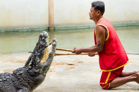 voracious: Samut Prakan, Thailand - January, 04, 2017 : Show the risk of death Crocodile show at crocodile farm in Samut Prakan, Thailand.This exciting show is very famous among among tourist and Thai people.