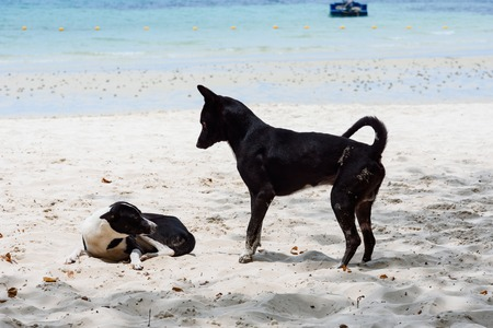 Dog on the beach at the Koh Samet island, Rayong, Thailand