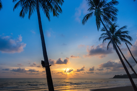 trat: Palm trees silhouette on sunset tropical beach at Koh Chang on Trat Thailand
