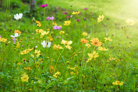 Colorful wild flowers field and sunlight in the morning.selective focus Stock Photo