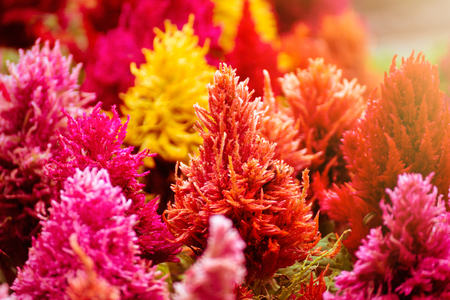 Amazing bright colorful flowers in sunlight Stock Photo