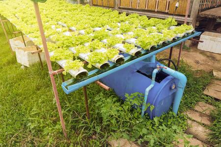 Hydroponics Groente Groente Groei in de kwekerij, Landbouw concept Stockfoto