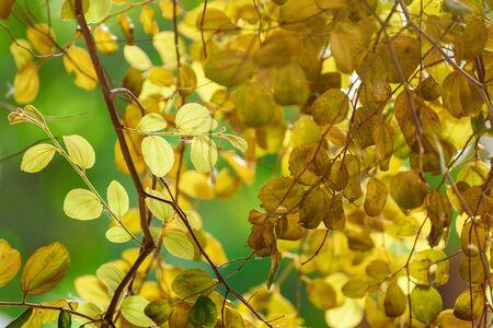 Półprzezroczysty drzewo opuszcza na światło słoneczne lata słonecznym dniu