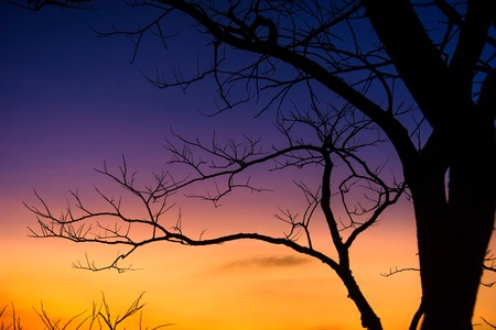 Silhouette of Bare Tree Branches on Sky in the Background.The rising sun with a deadly tree.Thailand Stock Photo