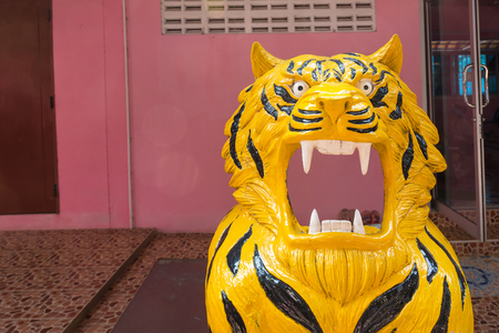Tigers  from to allow tourists to photograph.Thailand Stock Photo
