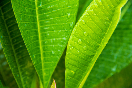 Closeup natural view of green leaf with copy space using as nature background or wallpaper Stock Photo
