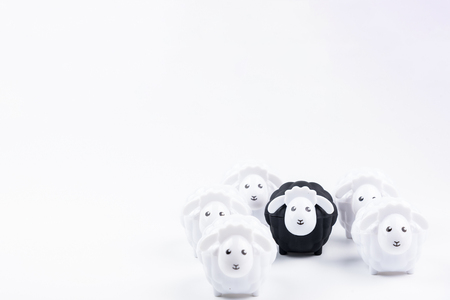 Black sheep doll and White sheep doll isolated on white background with blank for your text