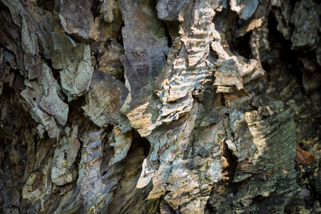 Scorched bark close up, background. Wooden texture abstract background.