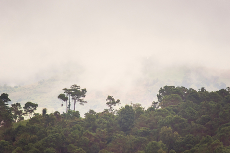 Misty morning foggy morning from the highland.Thailand 写真素材