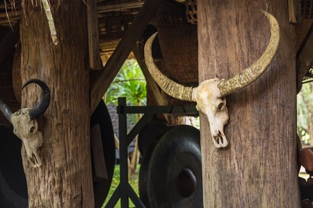 white large buffalo skulls head bone with horns installed on country house pole as art inspiration elements or old fashioned hunting and retro vintage decoration style.Thailand