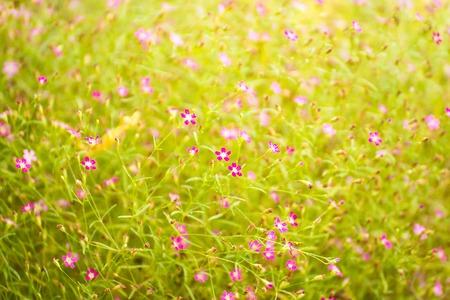 Hermosas flores en el jardín de flores en el tiempo de la mañana.Tailandia
