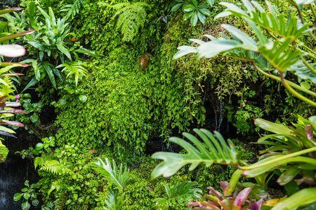 Exotic tropical plants wet forests are wet after rain.Thailand Banco de Imagens