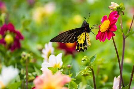 Butterfly insect alone on the flowers in the garden.Thailand