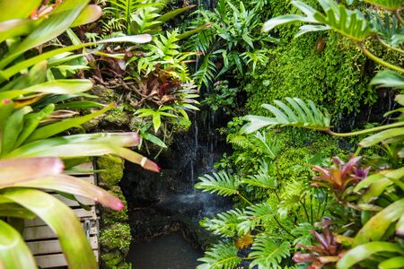 Exotic tropical plants wet forests are wet after rain.Thailand Stockfoto