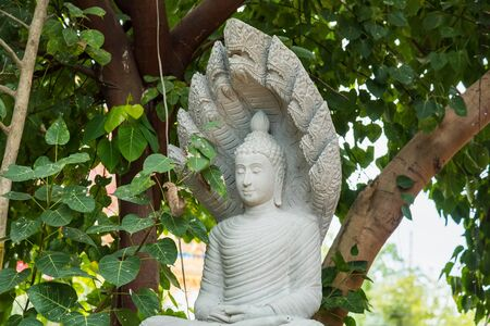 Buddha statue under the Bodhi tree under the Bodhi tree